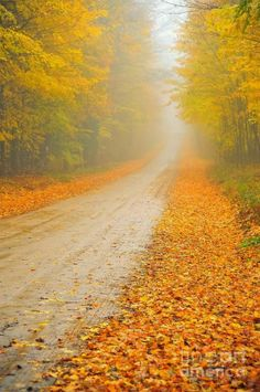 """Foggy Road In Autumn **<>**✮✮""""Feel free to share on Pinterest""""✮✮""""  #nature #cats www.fashionandclothingblog.com"""