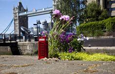 Here's a little garden dedicated to the humble London phone box. Tower Bridge London, Little Gardens, Chicago, Australian Garden, London Street, Guerrilla, Fantasy, Little Books, Topiary