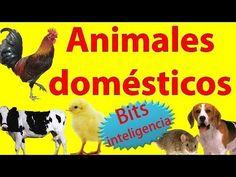 Animales Domesticos para Niños y Bebés | BITS | Enseñale a leer a tu beb...