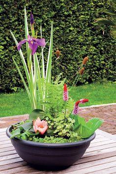 balcony garden Pond in a Pot: Create a Container Water Garden Container Pond, Container Water Gardens, Container Gardening, Pond Plants, Outdoor Plants, Water Plants For Ponds, Water Garden Plants, Aquatic Plants, Jardin Vertical Artificial
