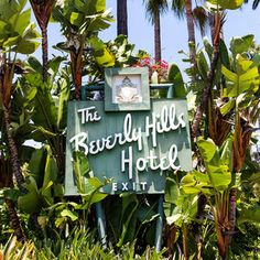 Famous Beverly Hills Hotel With Birds of Paradise Palms California Dates, California Palm Trees, Indoor Palms, Beverly Hills Hotel, Paradise, Tropical, Birds, Abstract, Plants