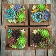 Thinking inside the box by Hanging Succulents, Succulents In Containers, Succulent Arrangements, Cacti And Succulents, Air Plants, Indoor Plants, Bonsai, Succulent Gardening, Miniature Plants