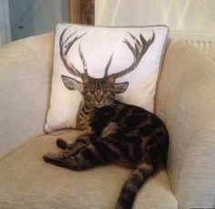 How Deer You Disturb the Cat