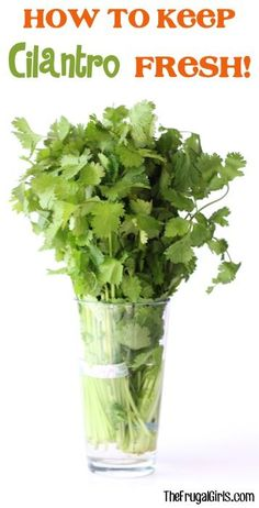 How to Keep Cilantro Fresh! ~ at TheFrugalGirls.com ~ this simple little kitchen tip works like a charm!