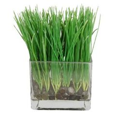 Organic Grass Growing Kit For Cat Hairball Treatment Pet Snacks Faux Grass, Artificial Flowers And Plants, Green Home Decor, Wheat Grass, Stone Houses, Glass Containers, Houseplants, Accent Decor, Glass Vase
