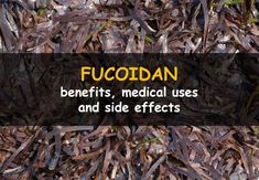 Benefits of fucoidan in cancer treatment, weight loss treatment and treatment of inflammatory bowel disease. Side effects and uses of fucoidan. Cancer Fighter, Cancer Treatment, Side Effects, Superfoods, Natural Remedies, Helpful Hints, Benefit, Medicine, About Me Blog
