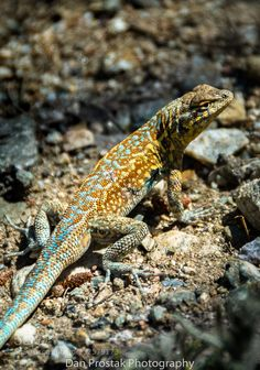 lizard on the rock by dzumpa 500px editors choice landscapes