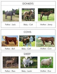 Farm animal nomenclature cards