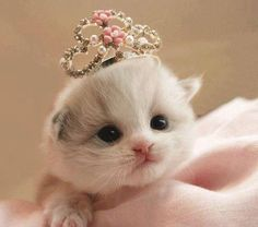 Princess Cute Cat http://ift.tt/2nN6hRe