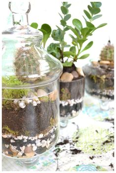 using apothecary jars to create terrariums