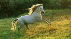 Cavalo trotando