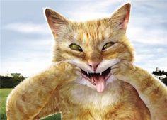 Funny cats ( 2pics)