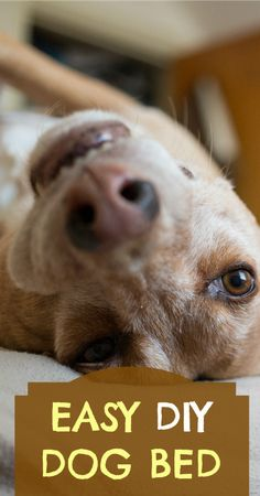 Easy DIY Dog Bed