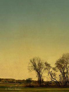 Field ©  digital image by Mary Baker