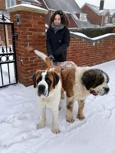 St Bernard Chien Saint Bernard, St Bernard Puppy, Big Dogs, Cute Dogs, Dogs And Puppies, Doggies, Animals And Pets, Cute Animals, Mountain Dogs