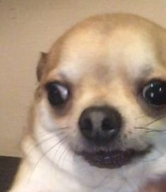 Funny Animal Jokes, Funny Dog Memes, Cute Memes, Really Funny Memes, Cute Funny Animals, Funny Animal Pictures, Funny Relatable Memes, Cute Animal Photos, Funny Cute