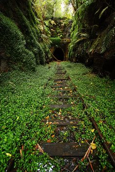 The old railway tunnel in Helensburg. Inside you can find a small colony of glowworms.