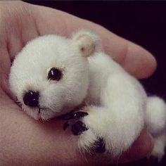 baby polar bear who'd love to roll around in a jar of cotton balls