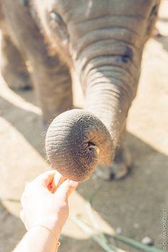Elephant Retirement Park Chiang Mai Thailand Olivia Poncelet