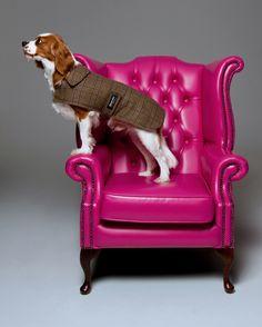 Bespoke dog coat
