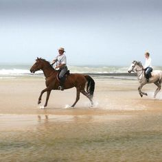 """They say """"no hour of life spent in the saddle is wasted"""" and we have to agree wholeheartedly. Did you know you can book horse riding at Sibuya as an extra activity? Go on now and spend a few thrilling hours enjoying a horse ride on the beach, there is no better way to experience South Africa's beautiful beaches. We promise.  #sibuyagamereserve #easterncape #kentononsea #southafrica #horseriding #beachlife #beach #holidayvibes #thingstodo #horses Game Reserve, Horse Riding, Canoe, Beautiful Beaches, South Africa, To Go, Swimming, Boat, Horses"""