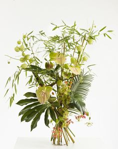 Happy bamboo - tropical summer arrangement with cymbidium, gloriosa and Anthurium. Bonsai, Corporate Flowers, Green Flowers, Floral Designs, Ikebana, Flower Art, Floral Arrangements, Bamboo, Centerpieces