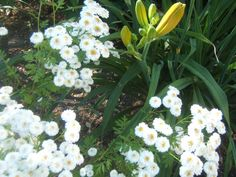 White in the Garden | SENSIBLE GARDENING AND LIVING