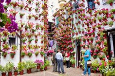 The Patios Festival in Cordoba is in the first week of May. Side streets, courtyards and patios all over Cordoba are filled with flowers. Cordoba Andalucia, Andalusia Spain, Flower Wall, Flower Pots, Spanish Patio, Dream Garden, Home And Garden, Cottage Patio, Casa Patio