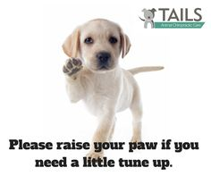 Dogs benefit greatly from chiropractic care. Chiropractic adjustments can help to reduce pain from injury or arthritis.