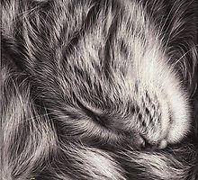 Cat nap by Elena Kolotusha
