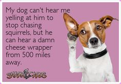 Well I encourage the squirrel chasing... but telling them to stop barking gets the same response!