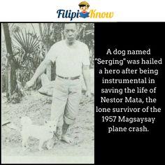 Serging hero dog in 1957 Magsaysay plane crash Lone Survivor, Blow Your Mind, Dog Names, Pinoy, Trivia, Plane, Philippines, Mindfulness, Hero