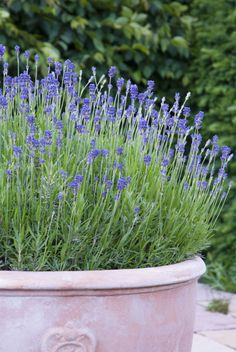 We'll take a lovely lavender bush over an ugly bug zapper any day.