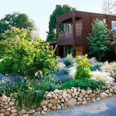 7 smart ideas for a low-water yard - When you need to ditch the lawn due to low-water conditions, opt for native plantings - Designing with Drought-Resistant Plants - Sunset