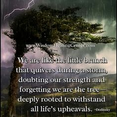 We are like the little branch that quivers during a storm, doubting our #strength and #forgetting we are the tree—deeply rooted to withstand all life's upheavals.