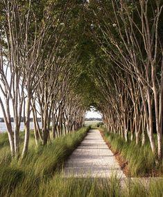 Back Gardens, Pathways, Garden Inspiration, South Carolina, Contemporary Design, Sidewalk, Country Roads, Photo And Video, Landscape