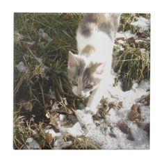 Winter Kitten Ceramic Tile