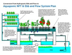 Hydroponics Blog: Healthier Food: Aquaponic NFT & Ebb and Flow System Plan                                                                                                                                                     More