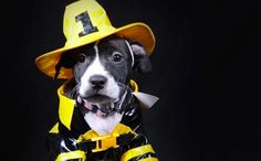 14 Adorable Dogs In Uniforms