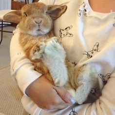 In loving memory of Rambo ♥ What a big boy! Funny Bunnies, Cute Bunny, Adorable Bunnies, Big Bunny, Mini Lop, Animals And Pets, Baby Animals, Cute Animals, Benny And Joon