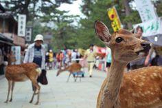 Shawn Choy, 日本