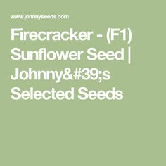 Compact Plants Produce A Mass Of Bright Bicolored Flowers That Are Great In Containers Also Known As Common Sunflower And
