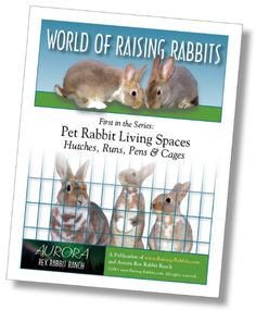 Plans for building rabbit cages. Many plans for ideal DIY rabbit cages