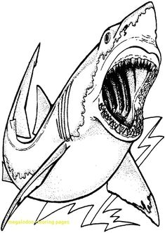 Great White Shark Coloring Pages . 30 Inspirational Great White Shark Coloring Pages . Free Printable Ocean Coloring Pages for Kids Shark Coloring Pages, Boy Coloring, Coloring Pages For Boys, Coloring Pages To Print, Free Printable Coloring Pages, Free Coloring Pages, Coloring Sheets, Coloring Books, Dinosaur Coloring
