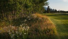 Prime building site in Teton Pines near the 18th fairway. Teton Pines is nestled at the base of the Teton mountains. Just five miles south of the world-class skiing at Jackson Hole Mountain Resort in Teton Village. $905,000.  Teton Pines Country Club. West Bank of the Snake River. Jackson Hole, Wyoming. (13-1963) www.spackmansinjh.com