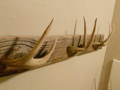 real deer horns - Google Search