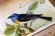 Lazuli Bunting vintage style  journal North by GuBoArtBook on Etsy,