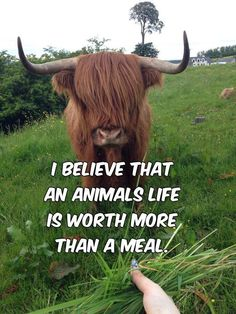 I believe that an animal's life is worth more than a meal