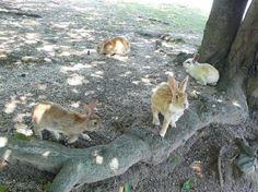 Okunoshima Island, Japan's rabbit paradise