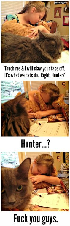Hunter S. Thomcat is a bit of a traitor to the cause (of cats being assholes). (thebloggess.com)